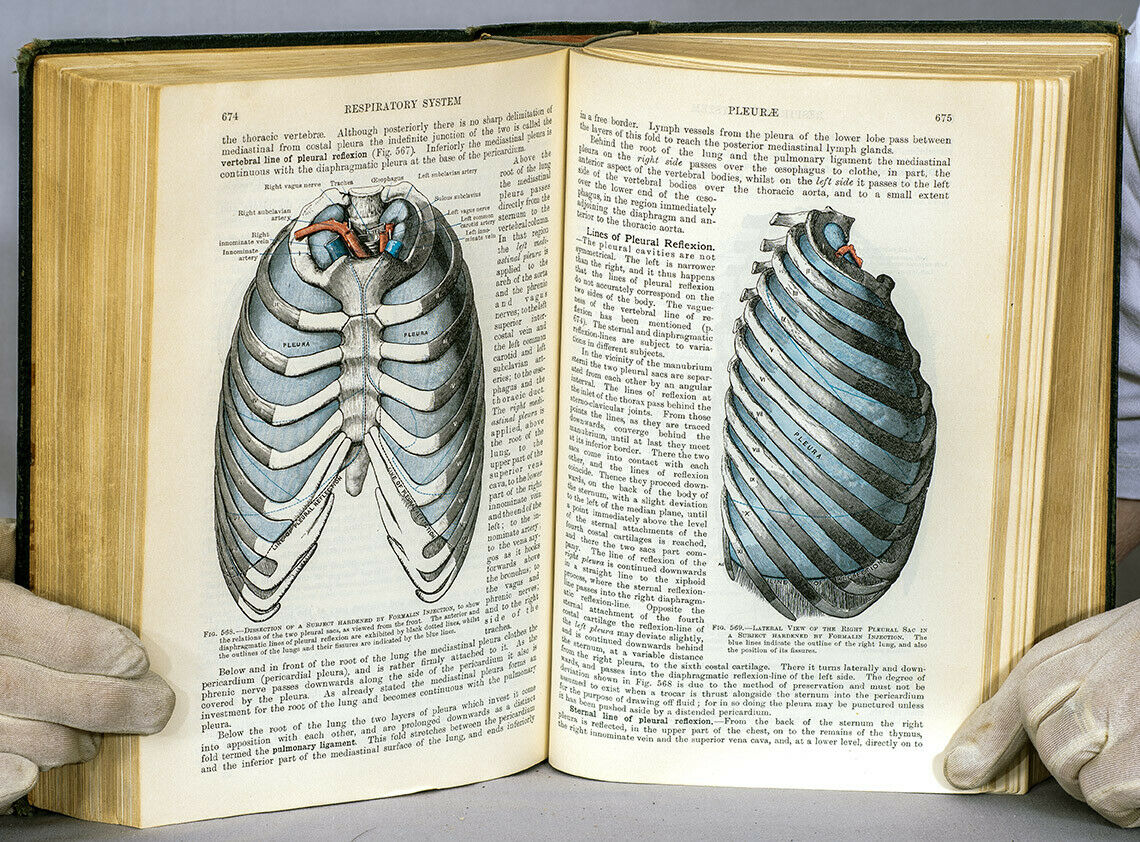 Cunningham's Textbook of Anatomy 7th edition 1937